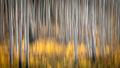 colorado, co, fall, san juan, owl creek, aspens, trees, flora, mountains, colorado plateau, sunrise, dallas divide, ridgway, backlight, rockies, rocky mountains, national park, predawn, dawn, sunrise,