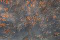 yosemite national park, yosemite, ca, california, trees, black oak, meadow, el capitan, flora, leaves