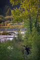 snake river, snake, river, mountains, landscape, tetons, grand tetons, sunrise, clouds, storm, jackson, trees, national park, water, spring, atmospherics, sunrise, moose, stars, predawn