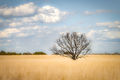texas, tx, spring, flora, oak, trees, clouds, hill country,