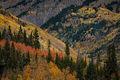 colorado, co, aspens, fall, colors, fall colors, san juan, san juan mountains, mountains, rocky mountains, flora, sunrise, sunset, autumn, ridgeway, our, durango, purgatory, crested butte, kebler pass