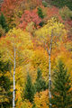 grand teton national park, tetons, snake river, snake, river, mountains, trees, water, color, aspens, clouds, meadows, fall, autumn, colors, cottonwoods, snake river, snake river canyon, maples