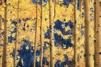 aspens, lee, vining, creek, sierra, ca, fall, california, eastern, trees, mountains
