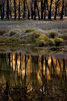 el capitan, meadow, yosemite, fall, valley, trees, reflections, water, merced, river, black, oaks, sierra, mountains, ca, california, landscape