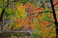 Merced River, Yosemite Valley, merced, river, yosemite, valley, ca, california, sierra, mountains, trees, dogwood, fall