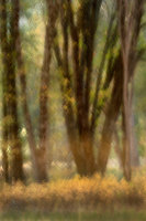 valley, trees, black oaks, yosemite, trees, plants, mountains, sierra, movement, impressions, blur, ca, california