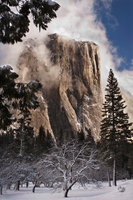 Yosemite Valley, yosemite, valley, ca, california, sierra, mountains, trees, black oak, black, oak, valley view, winter, snow, el capitan, meadow, clouds, storm, landscape,  winter, clearing storm, mo