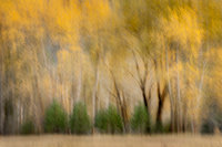 leipig, meadow, morning, yosemite, valley, trees, sierra, mountains, ca, california, cottonwoods, fall, impressions