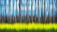 mustard, field, california, movement, impressions, flora, plants, grasses, trees, northern california, ca, california