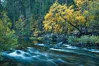 yosemite, pohono, water, yosemite, valley, fall, sierra, mountains, ca, california, merced, river, dogwood, trees