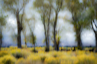 bishop, california, sierra, cottonwoods, trees, sage, movement, impressions, ca, california