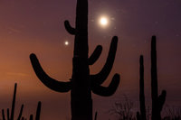 saguaro national park, saguaro, cactus, cacti, sunrise, AZ, arizona, desert, plants, southwest, stars, predawn