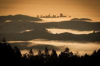 mt tamalpais, fog, sunrise, san francisco, marin, trees, headlands, ca, california