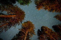 Stars, milky, way, pines, upper,  yosemite, valley, fall, sierra, mountains, ca, california, trees, night skies