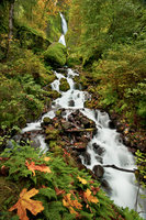 wahkeena, falls, or, oregon, columbiia river gorge, trees, water, waterfalls, pacific northwest, fall, creek