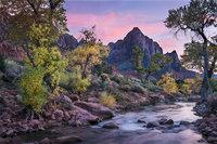 trees, fall, fall color, zion, mountains, utah, ut, southwest, virgin, river, virgin river, watchman, cottonwoods, twilight, sunset