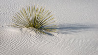 white sands, nm, new mexico, sand, sand dunes, southwest, desert, yucca