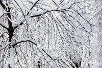 curry village, snow, storm, trees, yosemite, ca, california, sierra, mountains, landscape, valley, winter