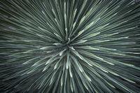 desert plants, plants, desert, arizona, az, yucca, sonora desert, sonoran