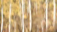 mountains, Wyoming, wy, jackson, Tetons, Grand Teton Park, landscape, Fall, trees, aspens, fall color, impressions, blur, sunrise,  targhee, idaho, id
