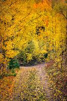 Rocky Mountains, San Juan mountains, rockies, san juans, fall, autumn, colors, trees, aspen, pine, fir, colorado, co, durango,