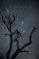 death valley, desert, southwest, west, trees, night, stars, national park, CA, California, mountains