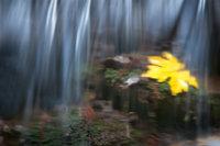 San Francisco Bay, California, CA, water, Mt Tamalpais, bay area,  golden gate, cataract trail, cataract creek, creek, falls