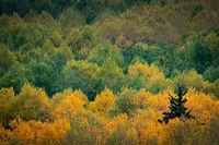 Rocky Mountains, San Juan mountains, rockies, san juans, fall, autumn, color, trees, aspen, pine, fir, colorado, co, telluride,