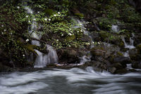 Dogwoods Merced River,
