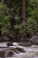 yosemite, national parks, sierra, sierra nevada, el capitan, half dome, cathedral rock, bridalveil falls, predawn, sunrise, mountains, waterfalls, stars, tunnel view, CA, woods, merced river, dogwoods