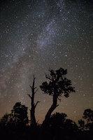 monument valley, southwest, sunrise, AZ, UT, arizona, utah, indian land, mountains, desert, stars, milky way, trees