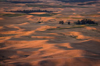 Palouse, WA, plants, landscape, photography, flora, hills, sunrise