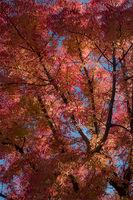fall, colors, bay area, trees, autumn, leaves, northern california, california