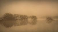 California, ca, water, fog, atmospherics, birds, ducks sunrise, gilroy, rain
