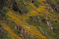 yosemite, sierra, horsetail falls, mountains, sunset, water, california, ca, winter, national park, wildflowers, poppies