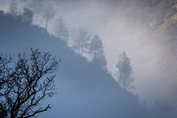 Yosemite National Park, yosemite, ca, trees, sierra, winter, fog, mountains, valley
