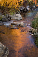 eastern sierra, sierra, aspens,  bishop creek, South fork, fall, ca, californiaeastern sierra, sierra, aspens,  bishop creek, South fork, fall, ca, california, trees, water, mountains, fall colors, bi