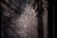 yosemite, national park, park, trees, sierra, california, ca, spring, merced, river, water, sunrise, snow, ice, sun, beams