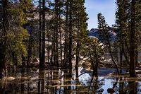 tenaya lake, tenaya, lake, reflections, ca, california, sierra, mountains, sunrise, clouds, water, high, country, trees, pollen, granite