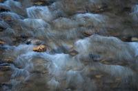 Zion, Zion National Park, ut, utah, red rock, trees, snow, spring, colorado plateau, southwest, mountains, sunrise, clouds, virgin, river, virgin river, water, rocks, river walk