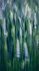 Lavender Movement