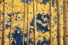 aspens, lee, vining, creek, sierra, ca, fall, california, eastern, trees, mountains