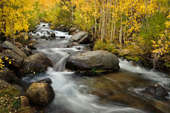 eastern sierra, sierra, aspens,  bishop creek, South fork, fall, ca, california, trees, water