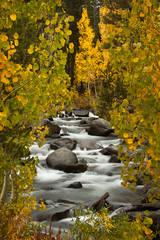 eastern sierra, sierra, aspens,  bishop creek, South fork, fall, ca, california, trees, water, mountains