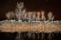 Cottonwood Pond Reflections