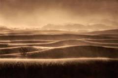 mesquite flat, sand, dunes, death, valley, ca, california, sunrise, desert, southwest, sandstorm, wind