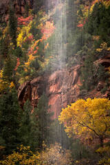 trees, fall, fall color, zion, mountains, utah, ut, waterfalls, water, emerald, pool