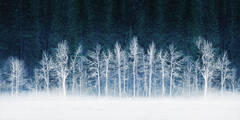frost, lei pig, meadow, trees, cottonwoods, snow, winter, sierra, mountains, yosemite, ca, california