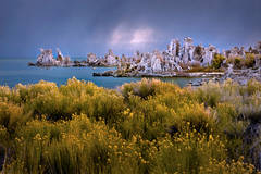 mono, lake, sunrise, tuffs, sages, wildflowers, eastern sierra, sierra, fall, dawn, lee vining, mountains