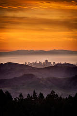 mt tamalpais, fog, sunrise, san francisco, marin, trees, headlands, ca, california